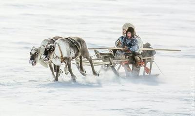 Фотография оленеводов одержала победу на международном конкурсе