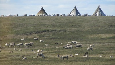 Экстремальная этнографическая экспедиция по Ямалу стартует в августе