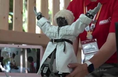 """Осетинского робота, танцующего лезгинку, показали на форуме """"Машук"""""""