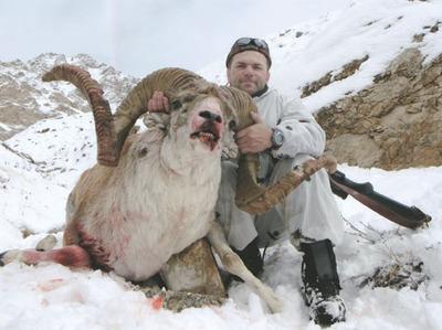 Экологи выступили против исключения из Красной книги священного животного алтайцев