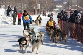 На Камчатке началась подготовка к юбилейной гонке на собачьих упряжках