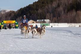 В Алтайском крае прошли гонки на собачьих упряжках