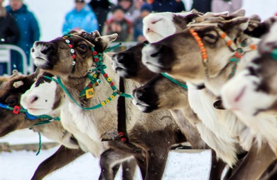 Гонки на снегоходах и оленьих упряжках пройдут в Нарьян-Маре