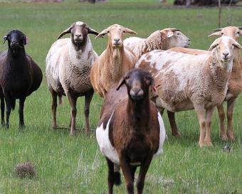 Казахский язык: разбираем по составу барана