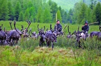 В Якутии выделят субсидии на устройство подростков на лето оленеводами и пастухами
