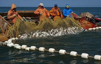 Аборигены Камчатки потребовали себе 20% общей доли квот на рыбу
