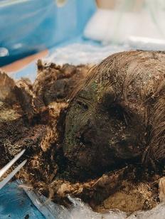 Ученые определят этническую принадлежность ямальских мумий