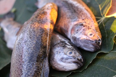Коренным народам Севера хотят позволить передавать право на добычу рыбы родственникам