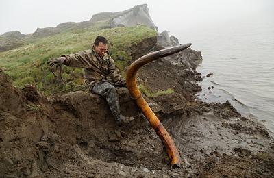 Якутия разработала закон о сборе бивней мамонта