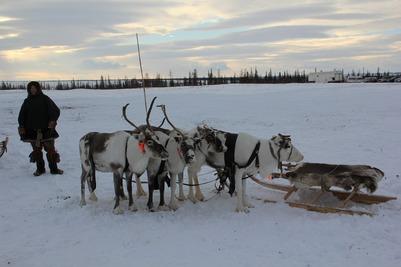 На Ямале выявили первый случай заражения коронавирусом среди тундровиков