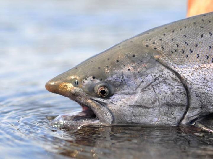 Магаданский чиновник мешал общинам коренных народов ловить рыбу