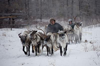 Вскоре может появиться закон о господдержке ведущих кочевой образ жизни коренных народов
