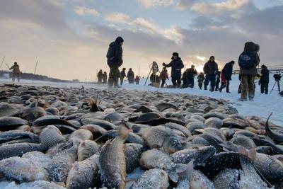 В якутских улусах начали отменять традиционную рыбалку мунха из-за коронавируса