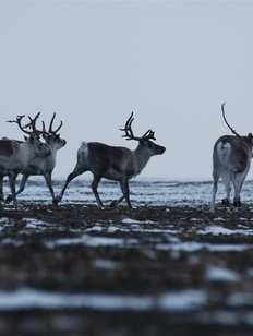 Якутские депутаты потребовали прекратить уголовное дело против охотников из числа коренных народов