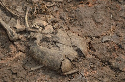 Древний скелет кочевницы нашли на Аркаиме в Челябинской области