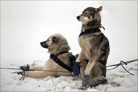 "Маршрут ""Берингии-2017"" сократят на 20 километров"