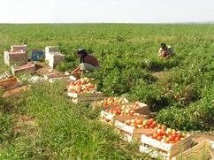 Работа мигрантов из Узбекистана обошлась астраханскому фермеру в 9 млн рублей
