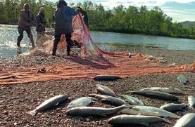 Глава Росрыболовства предложил давать льготы на вылов рыбы только тем КМНС, которые добывают ее не для продажи