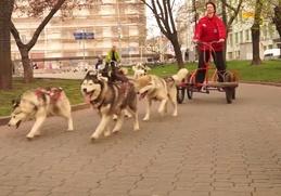 5 чукчей с петицией приехали к зданию Минпромторга на собачьих упряжках