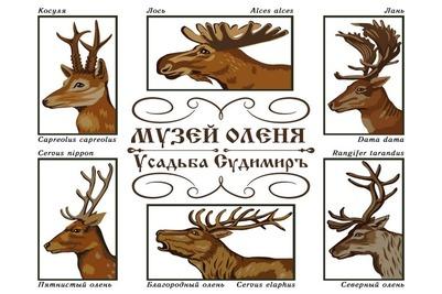 В Тверской области откроют музей оленя в канун праздника оленеводов