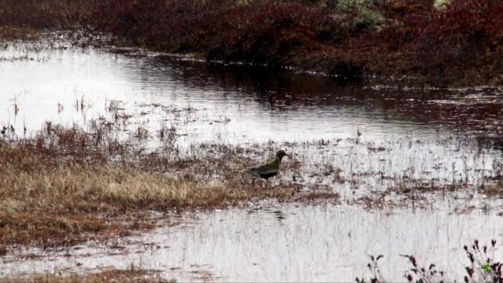 Сотрудники Нумто и коренные жители попросили Путина защитить природный парк