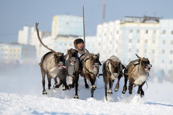 Оленеводам-частникам на Ямале помогут с жильем