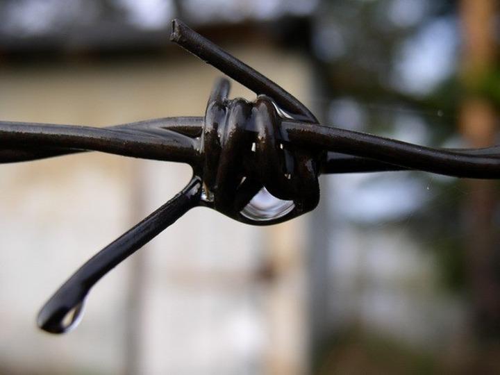 Заключенные мордовской колонии: Администрация колонии провоцирует межнациональные конфликты