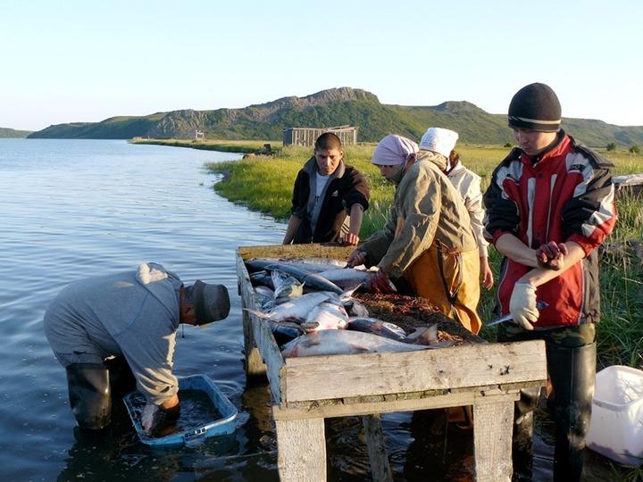 На Чукотке временно заменят традиционное рыболовство спортивно-любительским