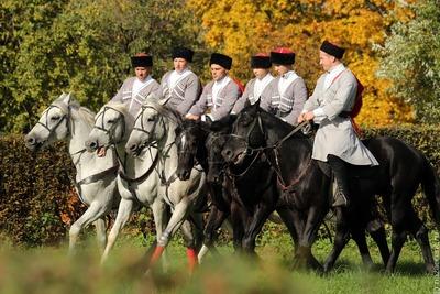 Первые республиканские казачьи игры пройдут в Чечне