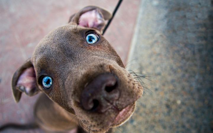 Москвичей прокатят на собачьих упряжках