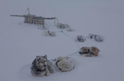"""На Камчатке третий день не могут продолжить гонку на собаках """"Берингия"""""""