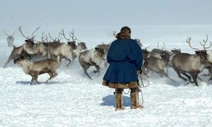 На Ямале предложили придать юридический статус оленеводам-частникам