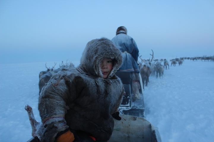 """Правительство возобновит международный проект """"Дети Арктики"""" и поддержит оленеводов"""