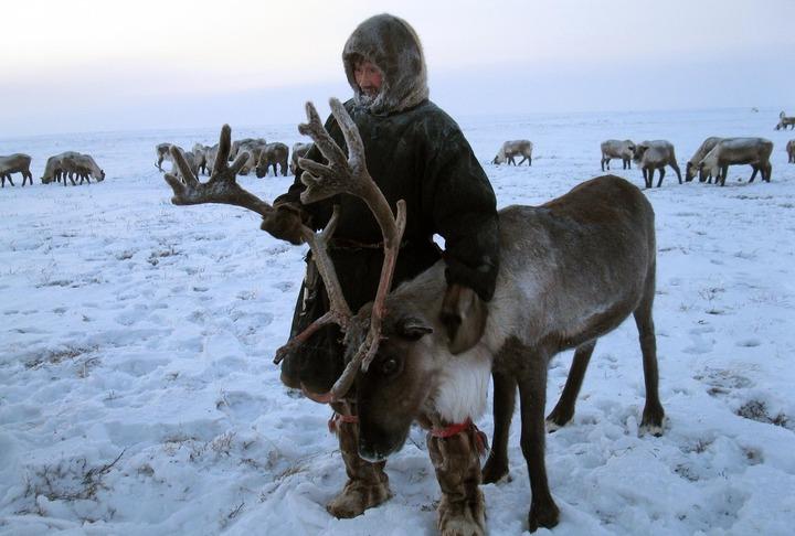 Камчатским оленеводам выплатили 11 млн рублей долга