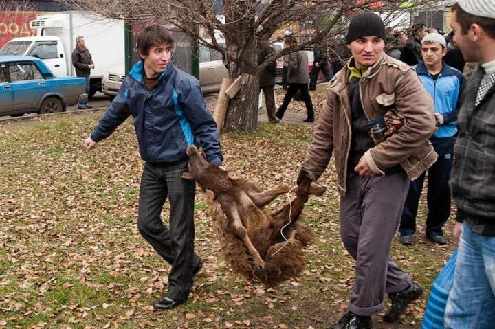В Москве готовится закон о запрете ритуальных убийств животных