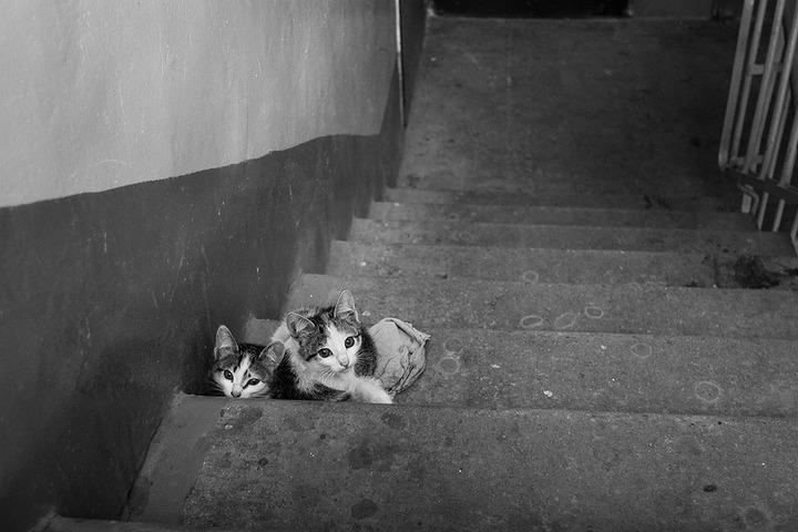 В Москве бытовой конфликт соседей из-за котят перерос в межнациональный
