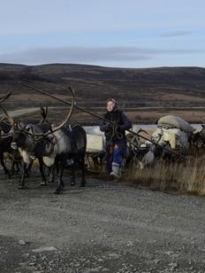 Ученые проведут социологические исследования среди кочевников Ямала