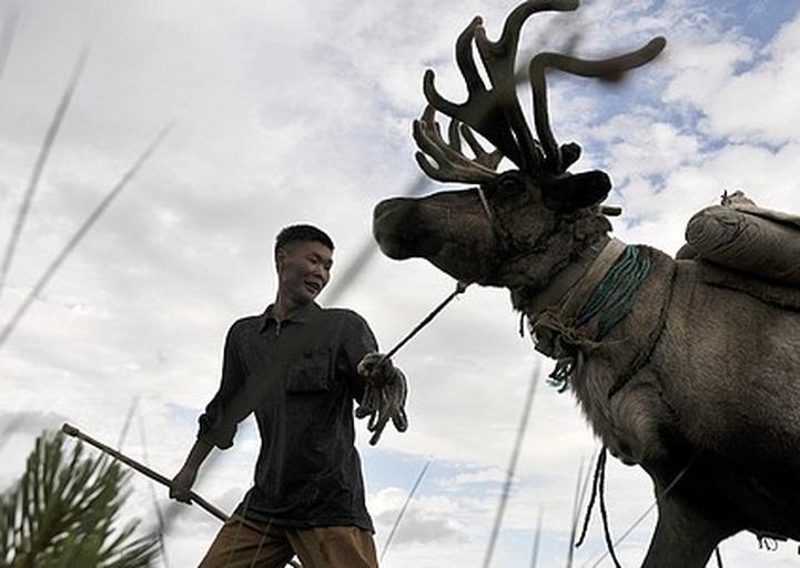 Праздник оленеводов пройдет на Сахалине