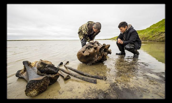 На Ямале местные жители нашли скелет мамонта