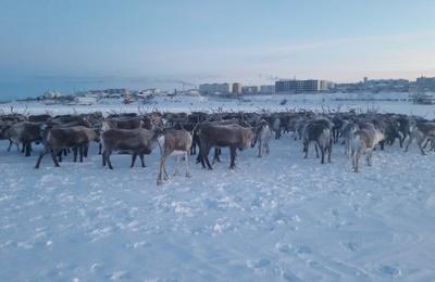Территории компактного проживания чукчей в Якутии могут получить охранный статус