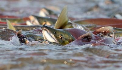 Коренным народам выделят рыбопромысловые участки в НАО
