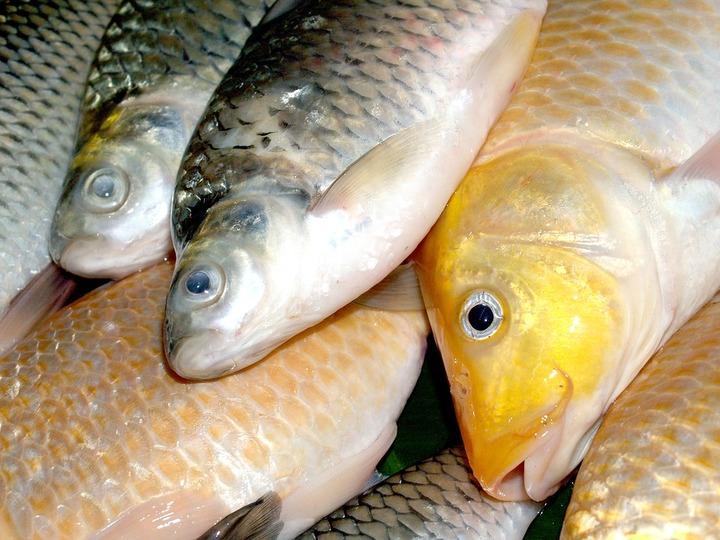 Ученые: Количество рыбы в рационе аборигенов Ямала сократилось вдвое