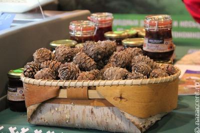 Алтайские тубалары выступили против передачи предприятию промысловых участков леса