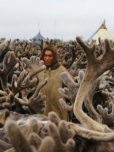 Союз оленеводов и охотников появился в Хабаровском крае