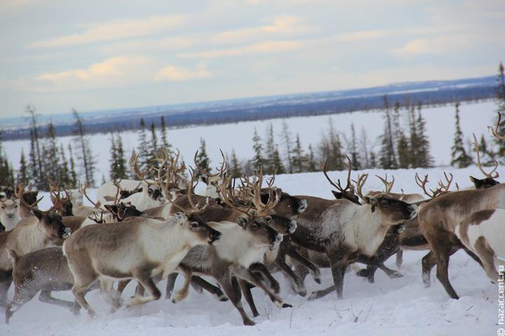 В ТПП предложили легализовать продукцию арктических народов, чтобы увеличить их доход