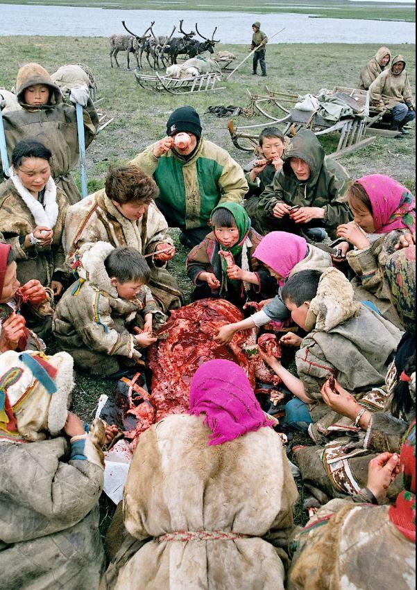 ненцы пьют кровь оленей