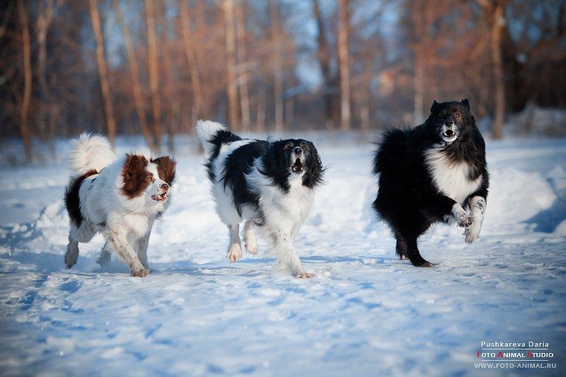 snow-dogs.ru